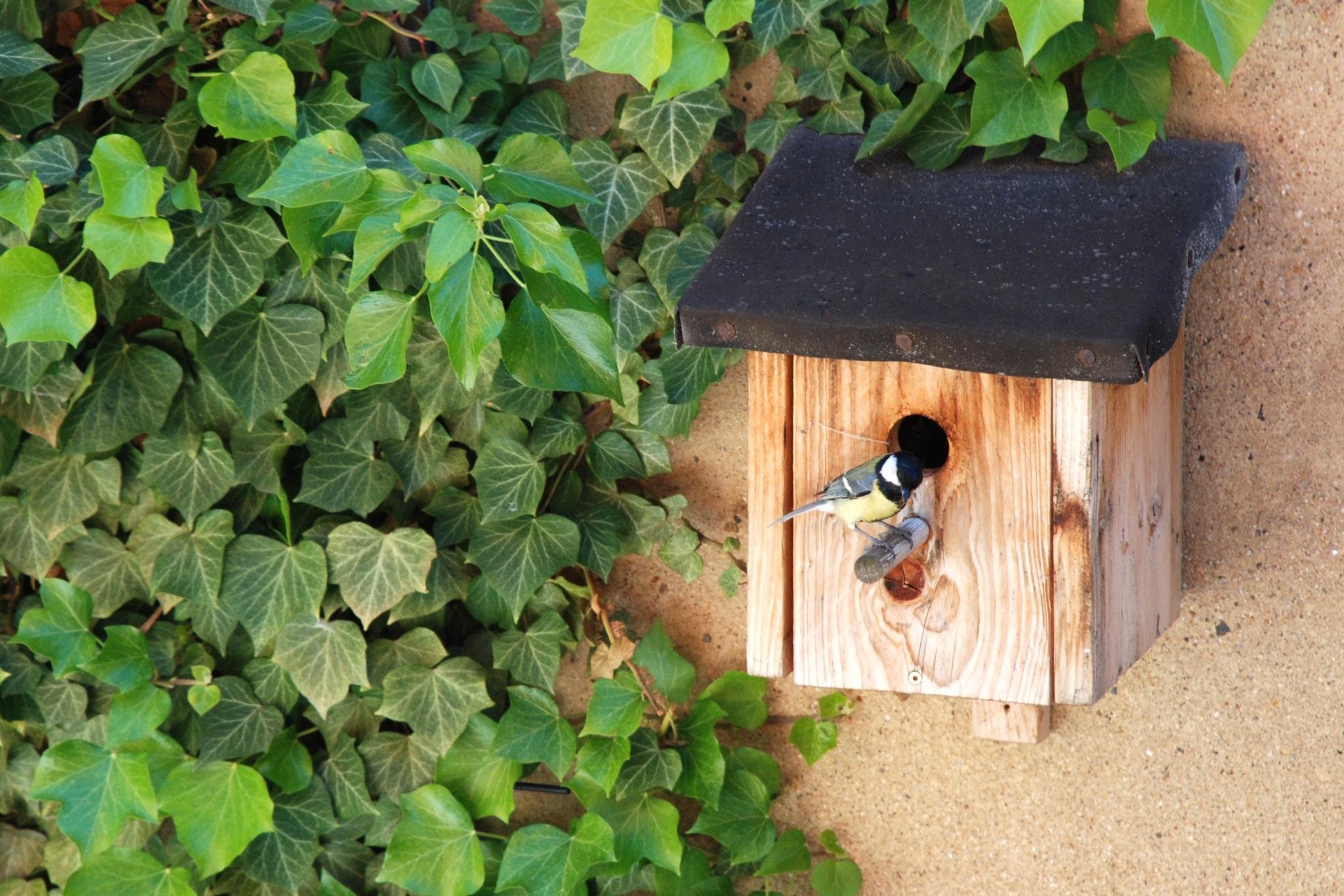 Kohlmeise sitzt auf einem hölzernen Vogelhäuschen